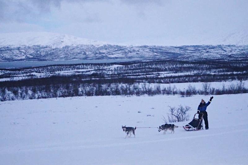 5-abisko-dog-sledding