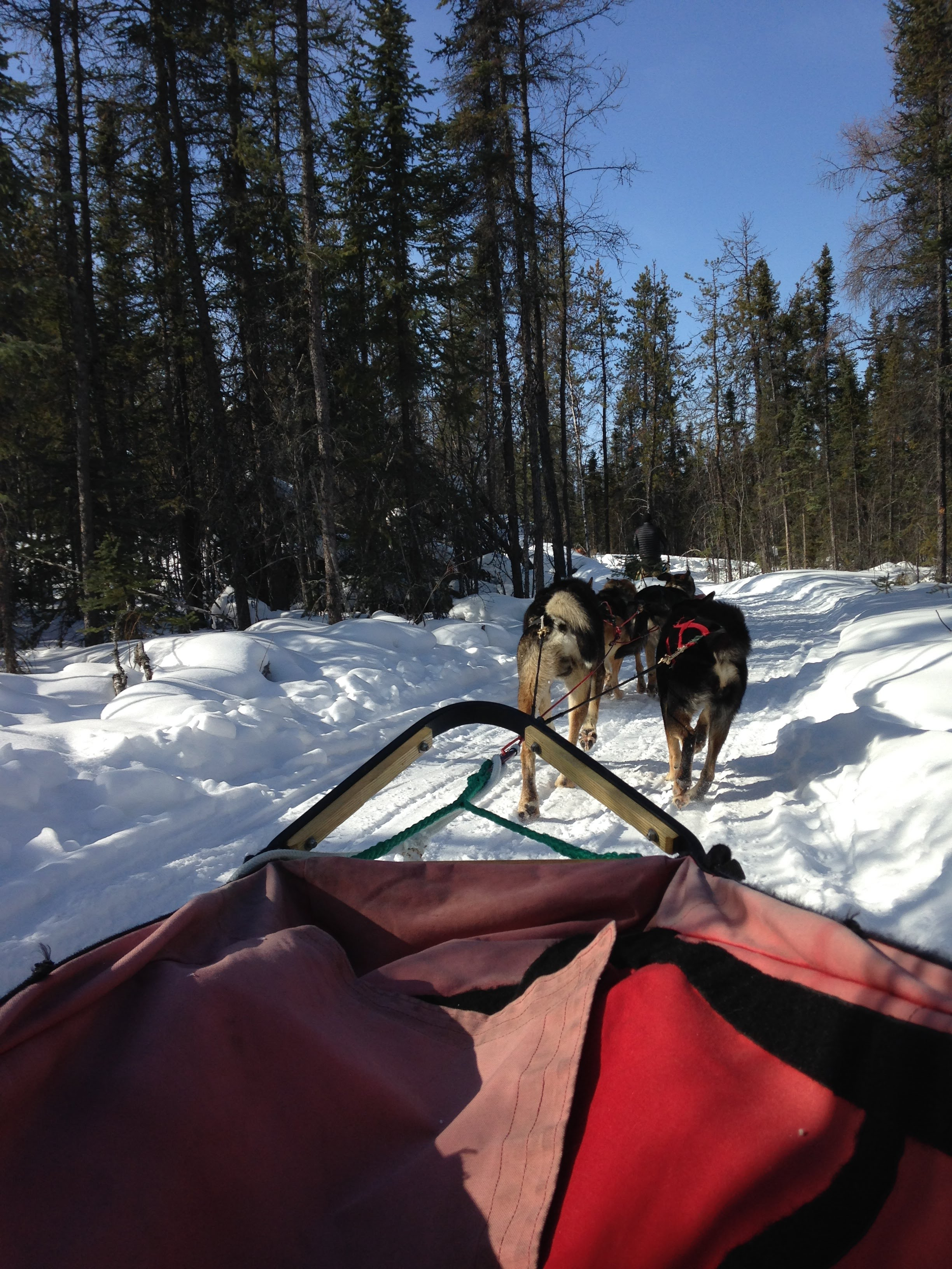 Northern Lights Dog Sled 2.JPG